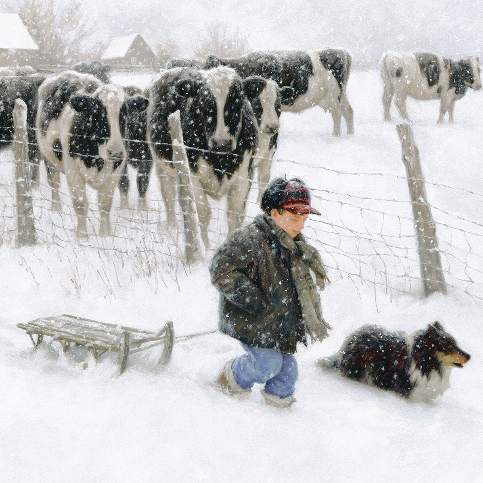 Cows watch a boy and dog pull a sledge in the snow