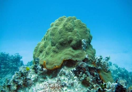Childhood glioblastoma, the effect of pregnancy, sea sponges and gold